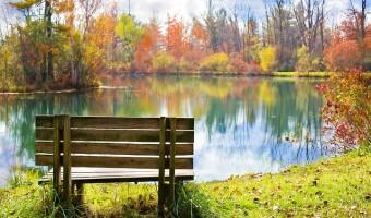 fall bench November